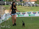 Concorrente #1: mini-pinscher
