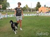 #20: la bella border collie