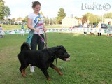 #25: Il rottweiler